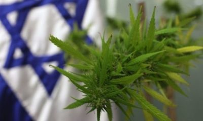 Cannabis effect on Endometriosis, a research by Israeli Researchers