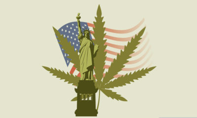 marijuana in new york