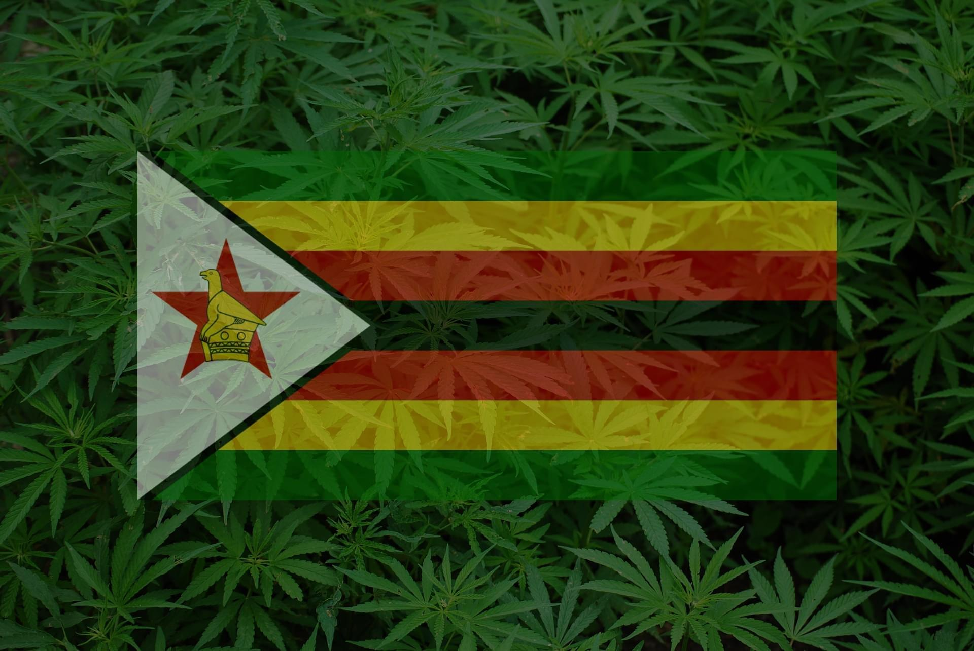 zimbabwe-medical-marijuana