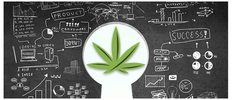 It seems like Cannabis Industry is going to be the next big industry of the world. Many cannabis startups with a bright future are ready to contribute to the industry.