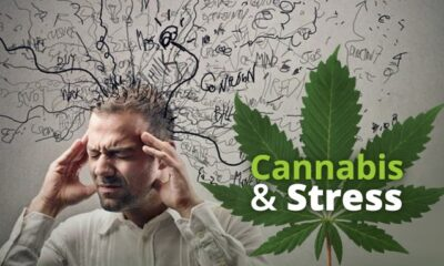 Cannabis and its derivatives are being used more frequently for mental health management in the COVID-19 struck world.