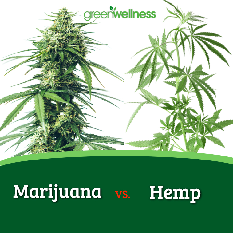 Hemp and marijuana belong to the same plant family, but there are key differences