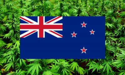 Cannabis legalization in New Zealand is losing is zest as other issues like euthanasia and covid-19 are gaining more attention.