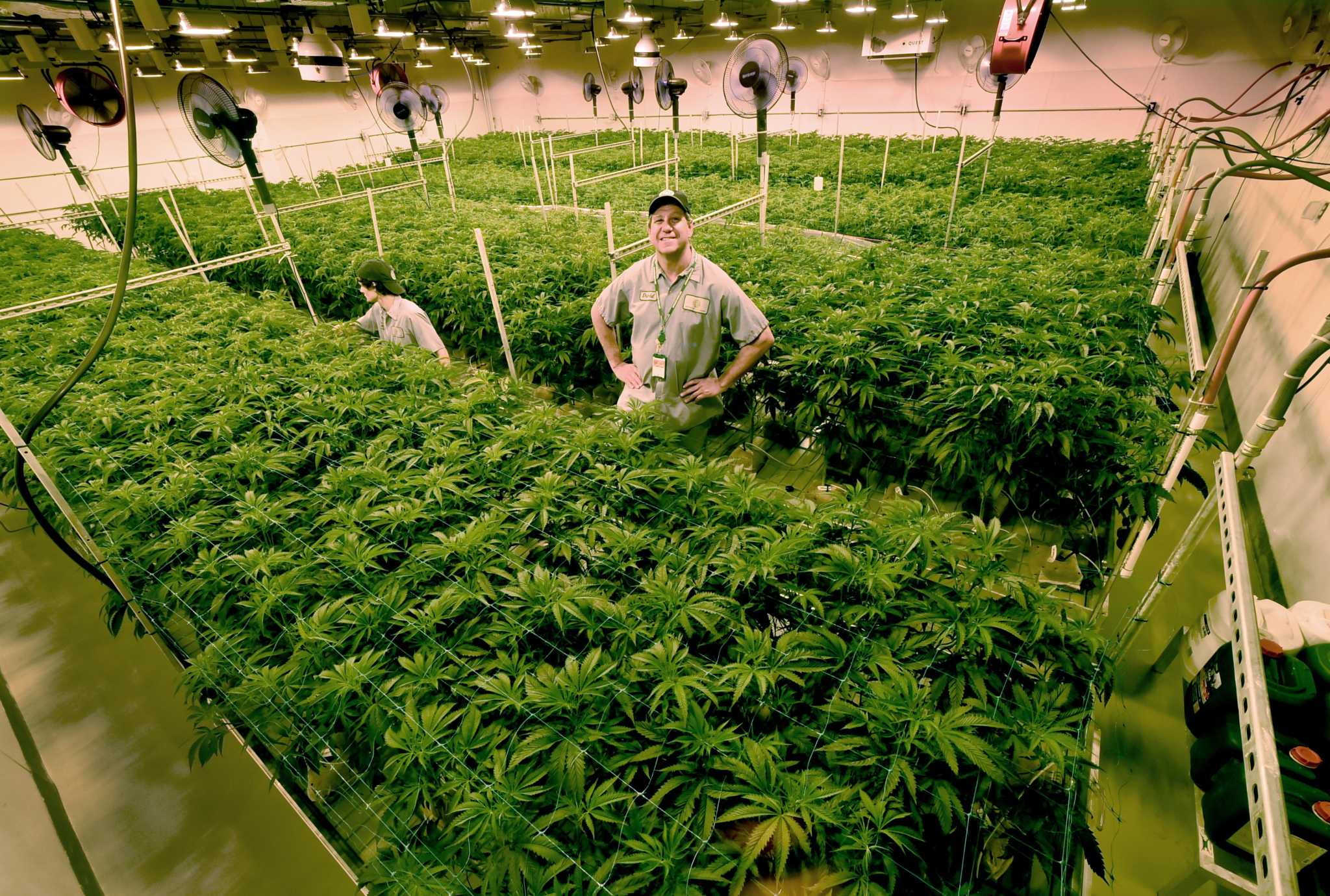 Cannabis Tycoon looking forward to CT legalization