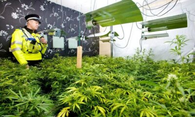 How to take care of your cannabis plant