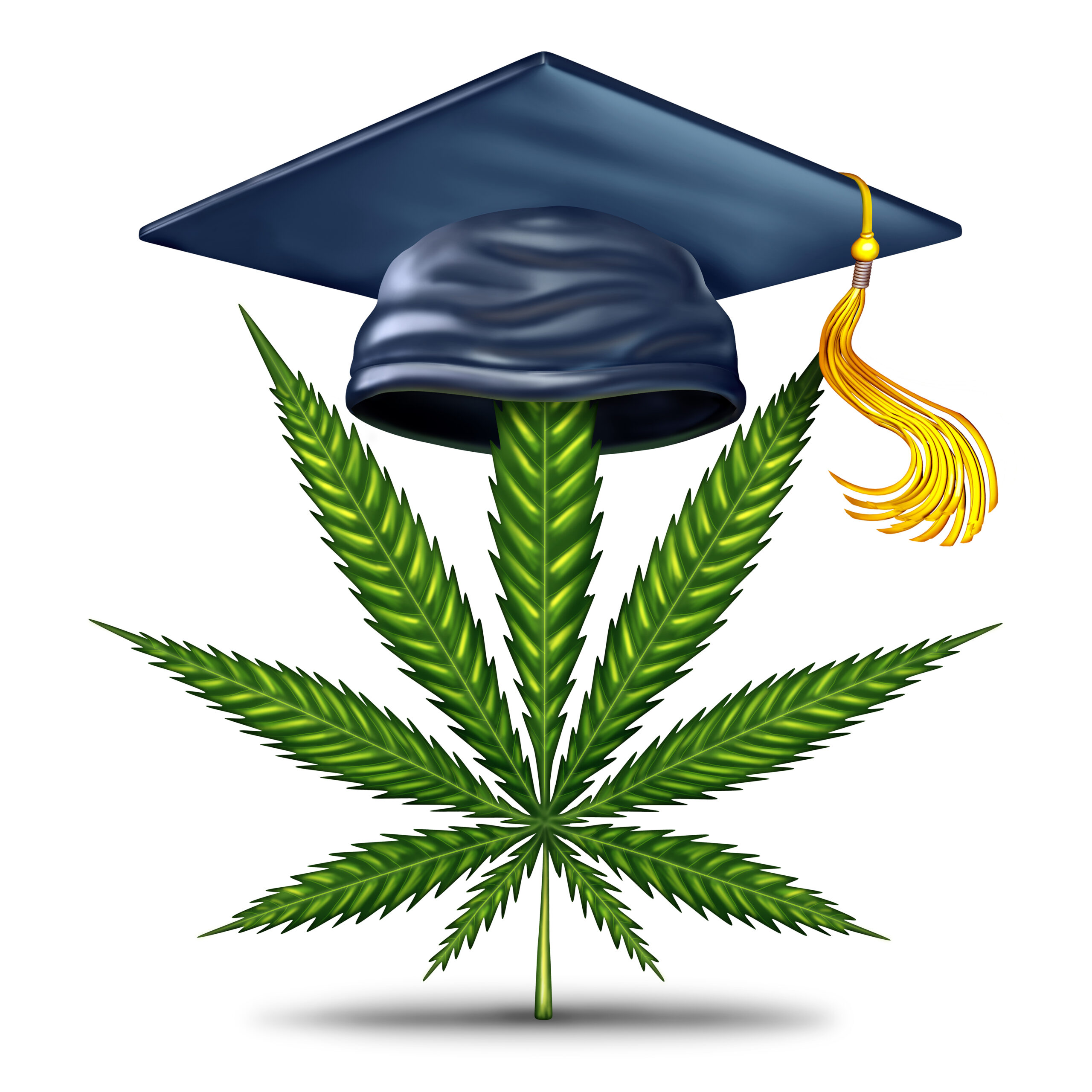 Cannabis education has become necessary with the increase in competitors.