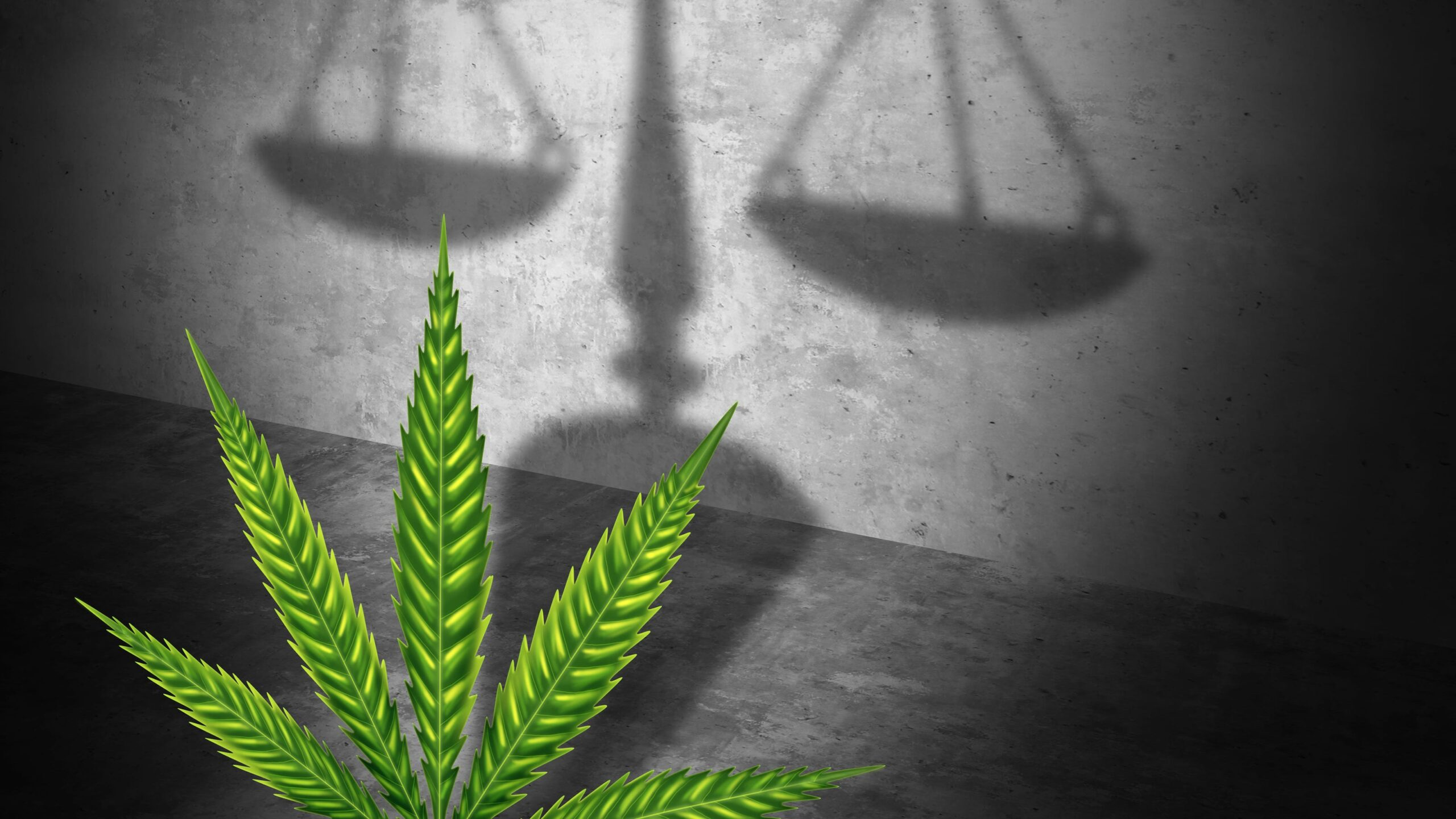 Advocating cannabis reforms has become essential to attain social justice and equality in the United States.
