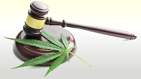 Cannabis legalization policies are being discussed across the board in the United States.