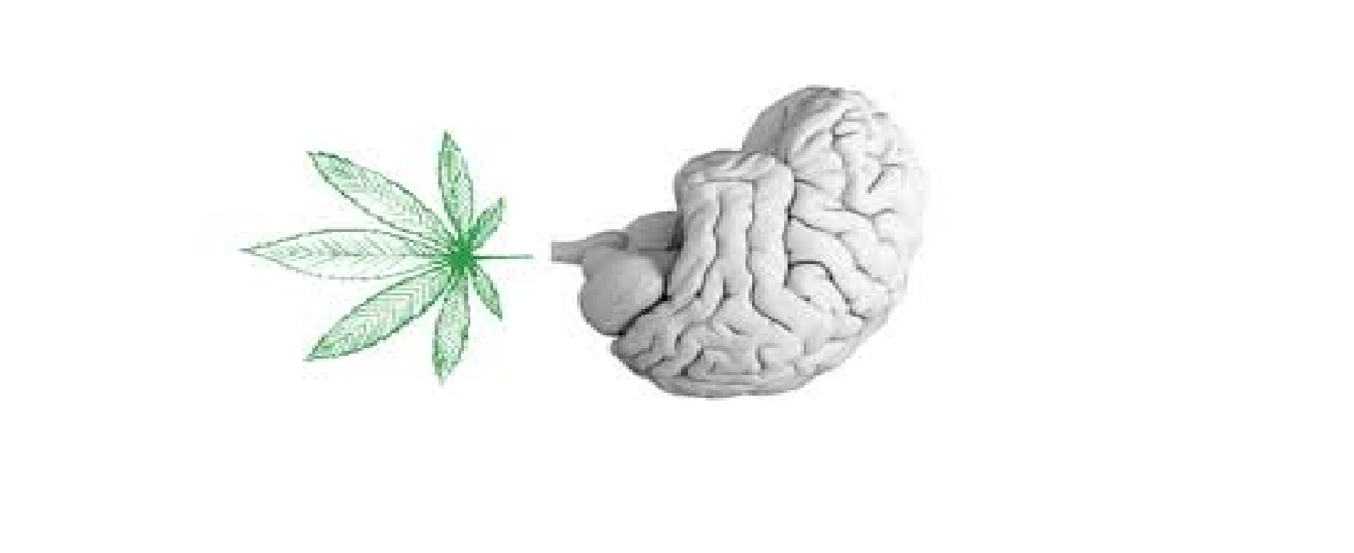 Does marijuana affects your brain?