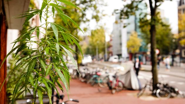 Amsterdam Bans Cannabis cafes for Tourists