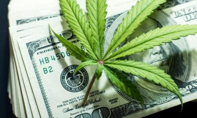 Cannabis Industry On Rise