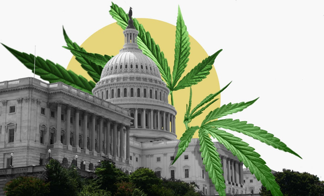 Cannabis and Government