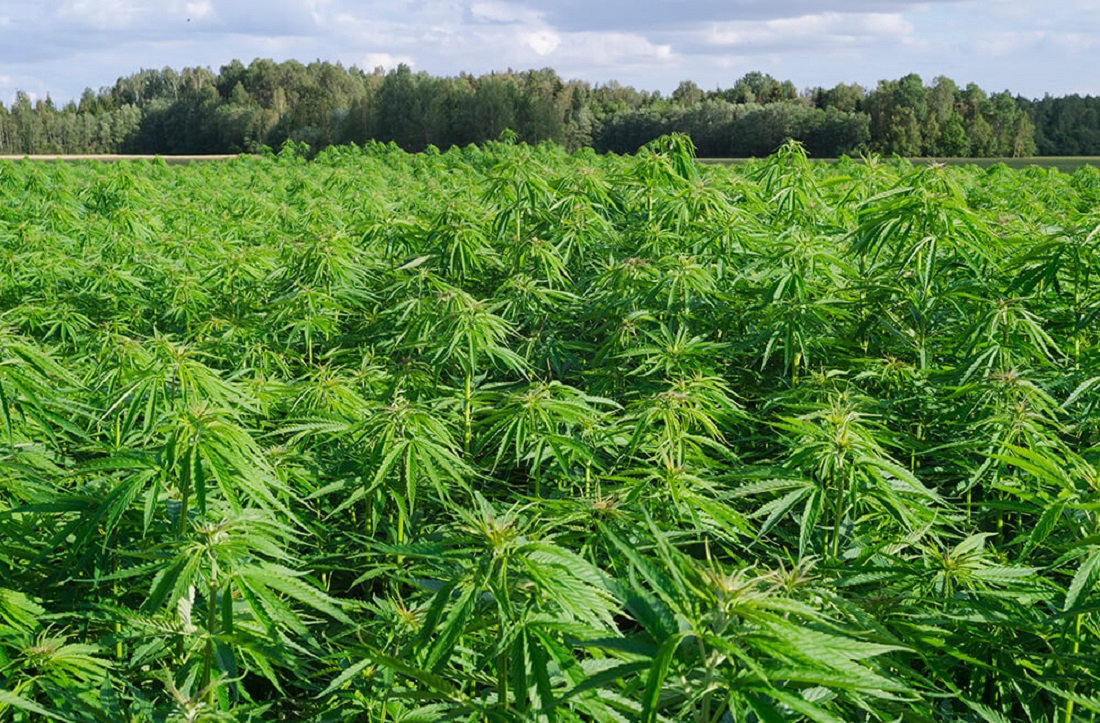 Legalize Cultivation Of Cannabis In Wisconsin