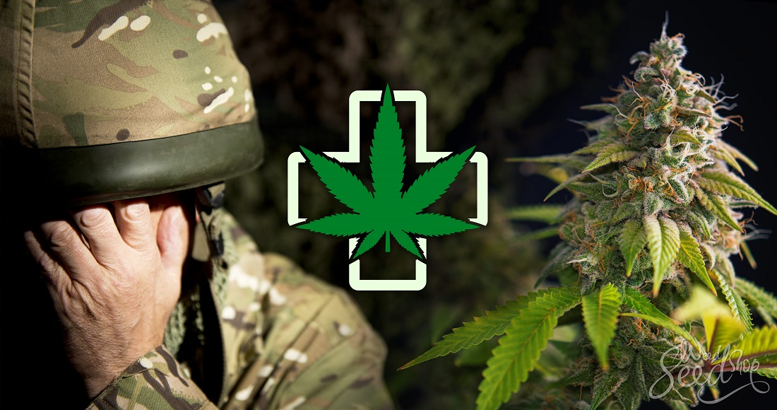 Marijuana for PTSD