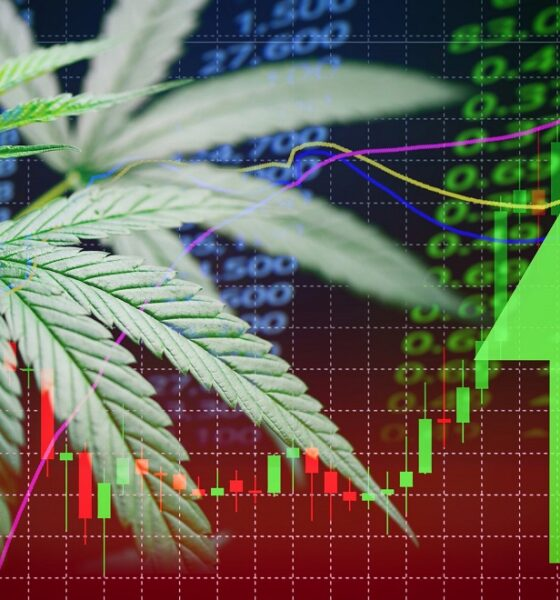 Cannabis Stocks Off the Charts