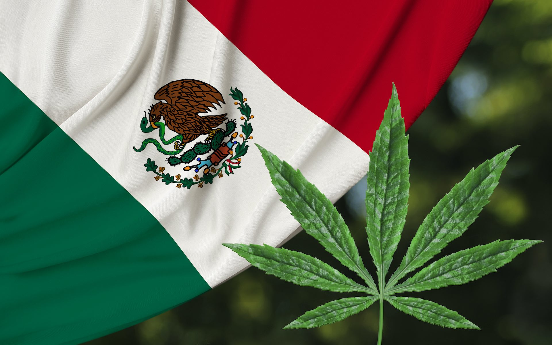 Mexico's Supreme Court Move A Head Of Lawmakers To Deem Cannabis Prohibition