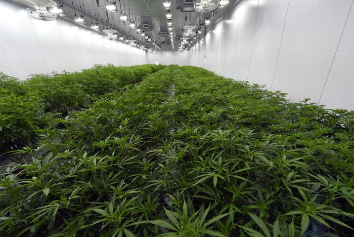 Staten Islanders Waiting For Cannabis To Become Legal