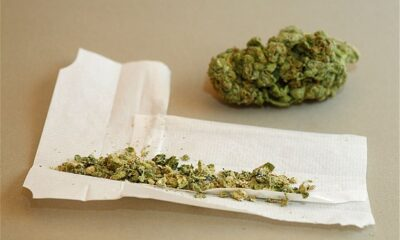 More Research Essential To Determine Cannabis Effects On CNS And ADHD Patients